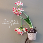 flowers-for-a-lonely-soul-iii